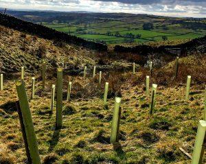 Image of Yorkshire Woodlands